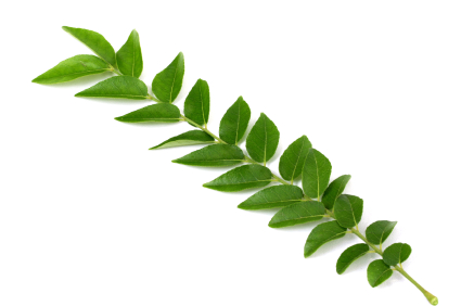 Buy Curry Leaves