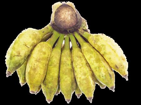 Buy Thai Bananas